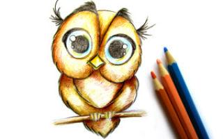Мастер-класс о том, как нарисовать сову