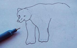 Инструкция о том, как нарисовать медведя