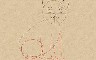 Способы того, как нарисовать кошку