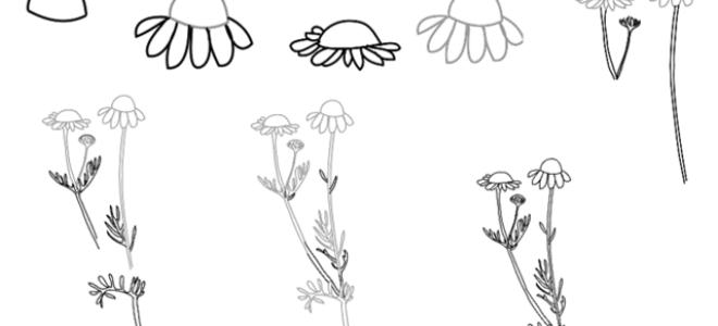Методы того, как нарисовать ромашку