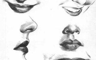 Инструкция о том, как нарисовать губы