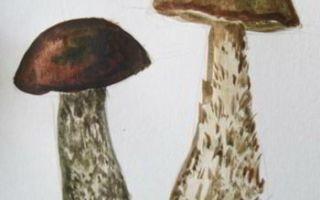 Урок о том, как нарисовать гриб