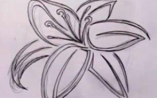 Советы о том, как нарисовать лилию