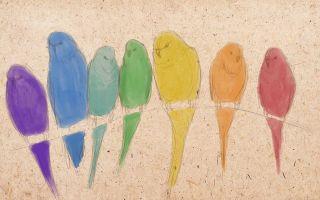 Урок о том, как нарисовать попугая