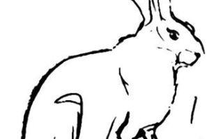Описание того, как нарисовать зайца