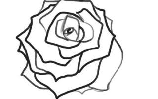 Урок о том, как нарисовать розу