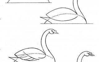 Советы о том, как нарисовать лебедя