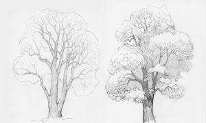 Советы о том, как нарисовать дерево