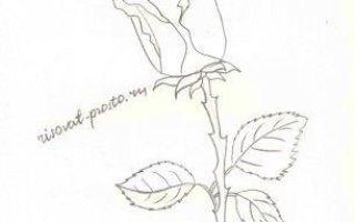 Методы того, как нарисовать розу