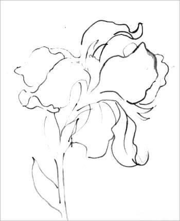 Как нарисовать ирисы: карандашом поэтапно видеоурок