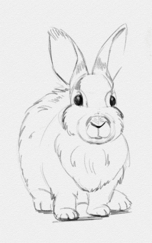 Как нарисовать зайца: рисуем зайчика карандашом