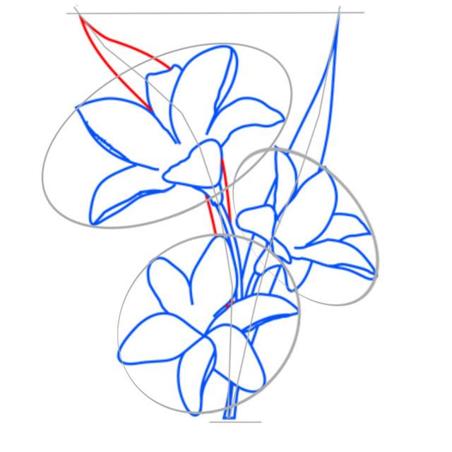 Как нарисовать лилию: карандашом поэтапно видео