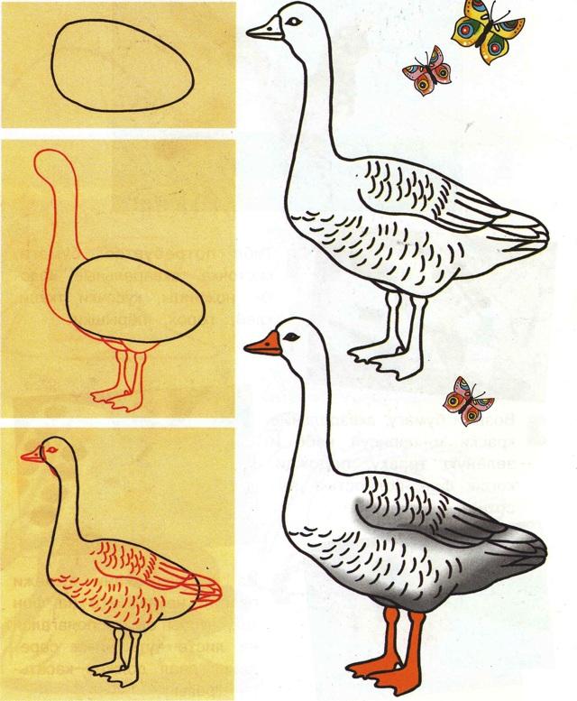 Как рисовать птиц: сову попугая лебедя голубя
