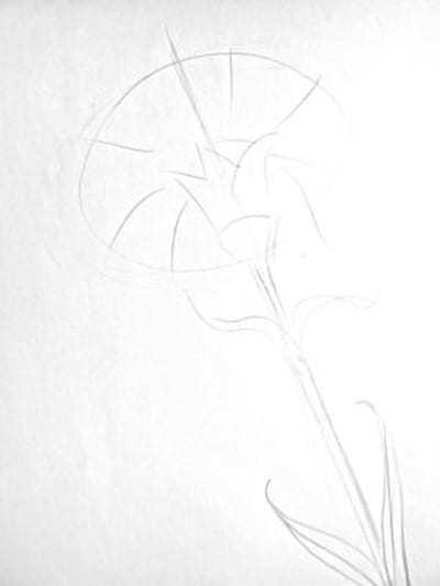 Как нарисовать гвоздику: карандашом поэтапно видео