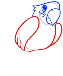 Как нарисовать попугая: карандашом поэтапно видео