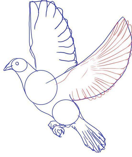Как нарисовать голубя мира голубей: карандашом поэтапно