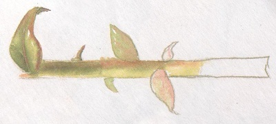 Живопись цветы: пишем красками розу магнолию ирисы подсолнухи