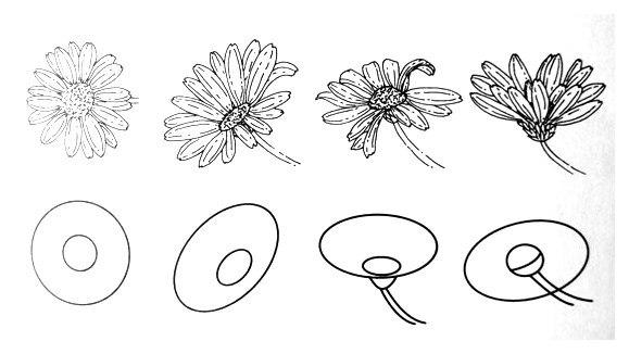 Как нарисовать ромашку: поэтапно карандашом видео