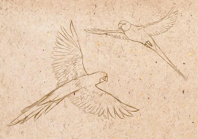 Как нарисовать попугая: карандашом, фломастером или красками, поэтапная инструкция для начинающих