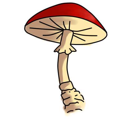 Как нарисовать гриб: карандашом, фломастером или красками, поэтапная инструкция для начинающих