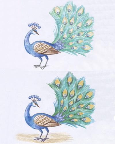 Как нарисовать павлина: карандашом, фломастером или красками, поэтапная инструкция для начинающих