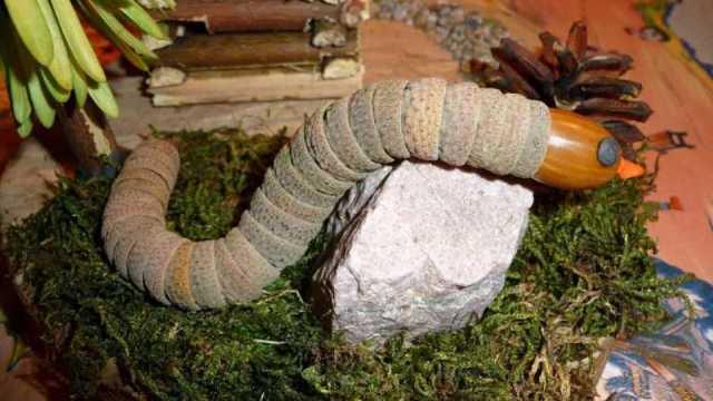 Поделки из природного материала: идеи изделий из натуральных материалов