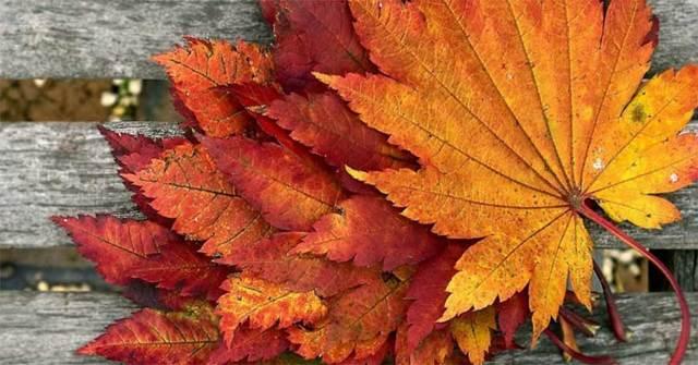 Поделки из листьев: идеи изделий из осенних листьев