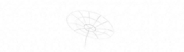 Как нарисовать ромашку: карандашом, фломастером или красками, поэтапная инструкция для начинающих